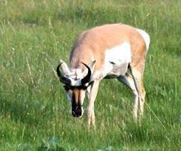 In grasslands remade by humans, animals may protect biodiversity | Sustain Our Earth | Scoop.it