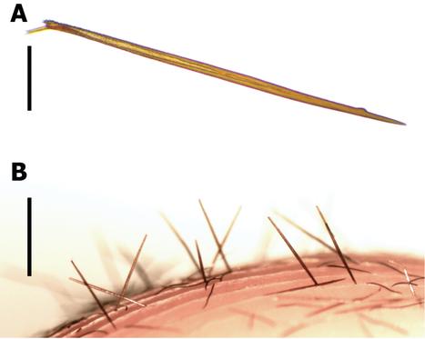 Découverte en Colombie d'une mygale dotée d'une arme inédite - National Geographic | EntomoNews | Scoop.it