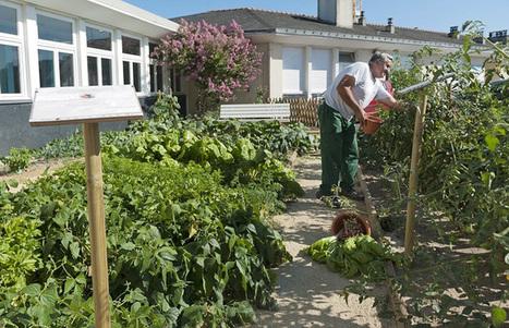 Au CHU d'Angers, le jardin partagé trouve sa place | Des 4 coins du monde | Scoop.it