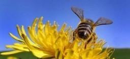 México: Desarrollan innovación tecnológica contra plaga que ataca abejas | Biblioteca CCBA | Scoop.it