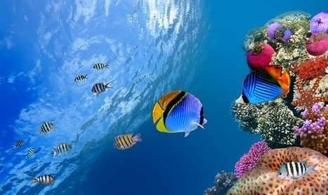 Fish Getting 'Drunk' From High Carbon Dioxide Levels: Study | All about water, the oceans, environmental issues | Scoop.it