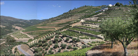Farr Vintners - 2011 Vintage Port - An Extraordinary Vintage | The Douro Index | Scoop.it