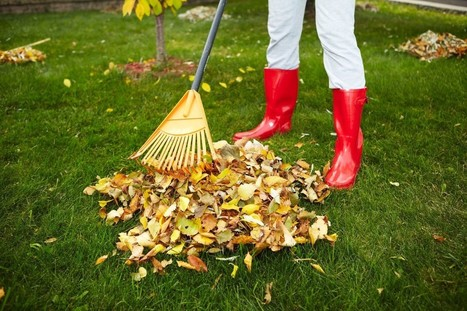 Proper Body Movements While Raking Lessen Prospects for Urgent Care | USHealthWorks.com Federal Way Center | Scoop.it