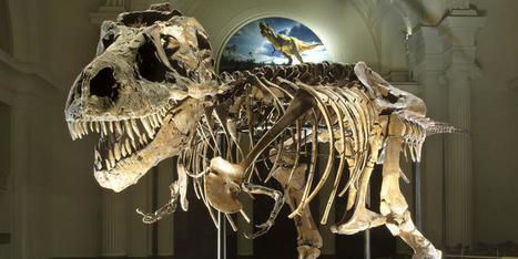 SUE the T. rex | Humanidades digitales | Scoop.it