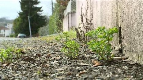 Orthez : la ville teste un désherbage écolo – environnement - France 3 Aquitaine | location-landes-mimizan-plage nature | Scoop.it