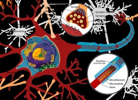 Set to fade: is the brain doomed to degenerate? | Brain, mind, consciousness | Scoop.it