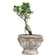 Green Plants for Corporate Offices | Corporates Gifts Online In India | Scoop.it