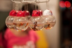 End the Sale of Live Animal Keychains | Nature Animals humankind | Scoop.it