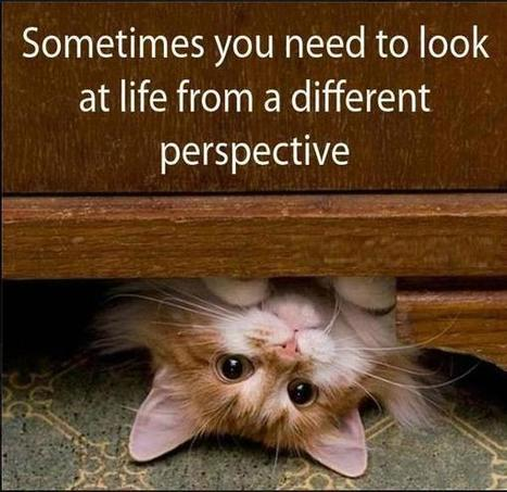 sometimes-you-need-to-look-at-life-from-a-different-perspective.jpg (600x582 pixels) | Histoire de chats | Scoop.it