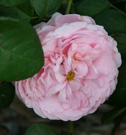 Garden Musings: Allegra   Annie Haven   Haven Brand   Scoop.it