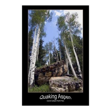 Hillside Quaking Aspen & Unearthed Boulders Print   Z Photography   Scoop.it