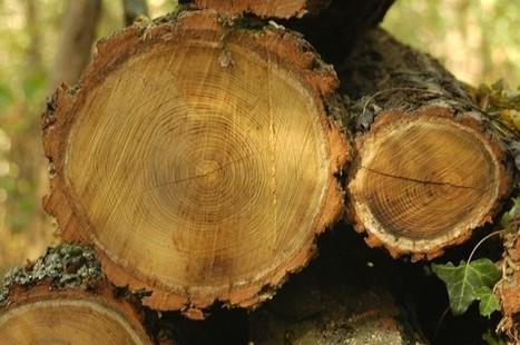 Le bois, le top de l'isolation ! | Solution pour l'habitat | Le flux d'Infogreen.lu | Scoop.it