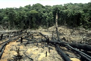The Amazon Rainforest lost 7000 km2 of deforestation in 2010 ... | Crum Classroom Resources | Scoop.it