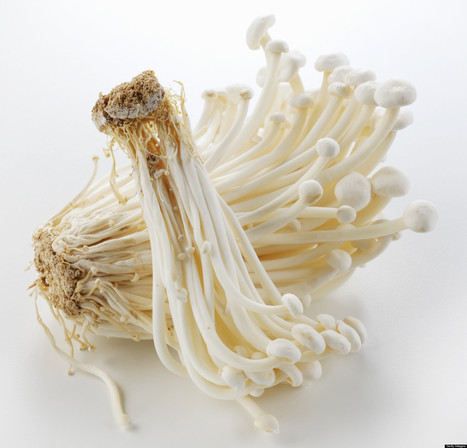 Can Eating Enoki Mushrooms Lower Your Cancer Risk? | mushrooms and cancer | Scoop.it
