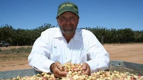 'Best pistachio-growing season in years' for Arizona grower | Western Farm Press | CALS in the News | Scoop.it