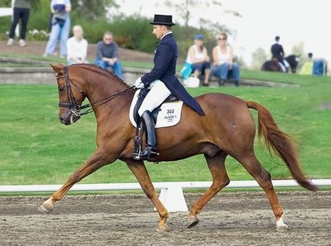 Increase Your Dressage Horse's Mobility | Equine massage | Scoop.it
