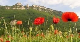 Pour le sociologue Jean Viard, « le tourisme est une révolution économique » | économie et tourisme responsable | Scoop.it