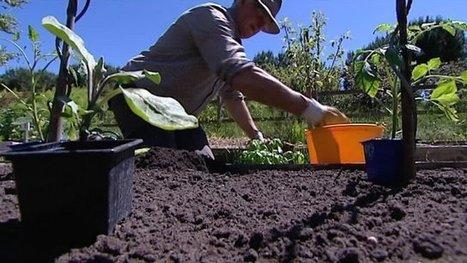 Le compagnonnage ou comment embellir son jardin naturellement - France 3 Aquitaine | De Natura Rerum | Scoop.it
