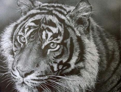 julie rhodes, Julie Rhodes - wildlife pencil artist, wildlife art, animal drawings, snow leopards, art, wildlife drawings, tigers, lions, big cats, drawing animals, galleries, wildlife art gallery,...   My Journey   Scoop.it