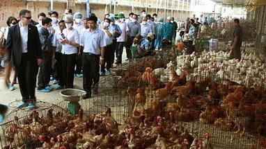Vietnam fears stronger virus strains amid bird flu resurgence - Thanh Nien Daily | International Health | Scoop.it