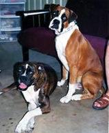 Dog Adoption San Antonio | tuku55eo | Scoop.it