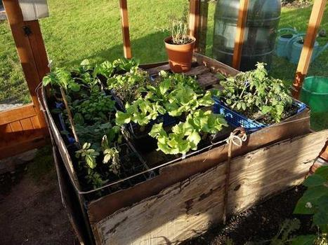 Heating a Greenhouse with Compost and Manure | Permaculture University | Scoop.it