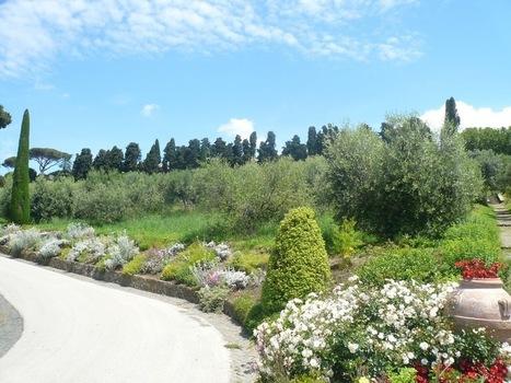 Un viaggio tra gli olivi di Papa Francesco - Teatro Naturale | Gli alberi nei giardini | Scoop.it