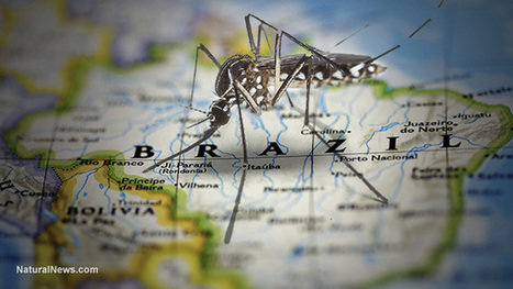 After terrorizing America with Zika scaremongering, Washington Post now admits Zika virus doesn't cause brain deformities after all | Liberty Revolution | Scoop.it