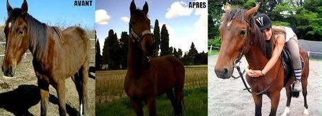 Blog Cheval - Par des cavaliers pour des cavaliers - Blog équitation | Blog Cheval | Scoop.it