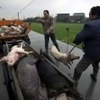 China's dead pig scandal ushers in hard times for fishermen, farmers | Sustain Our Earth | Scoop.it