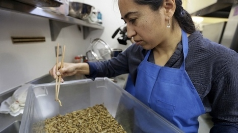More businesses launching to market edible insects | Entomophagy: Edible Insects and the Future of Food | Scoop.it
