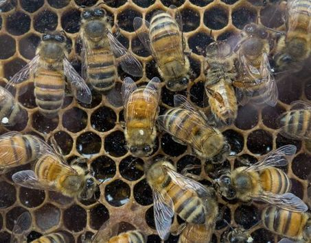 Etats-Unis: premières mesures contre les pesticides tueurs d'abeilles | Le flux d'Infogreen.lu | Scoop.it