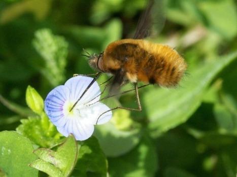 Qui sont les principaux insectes pollinisateurs ? | Postcolonial | Scoop.it