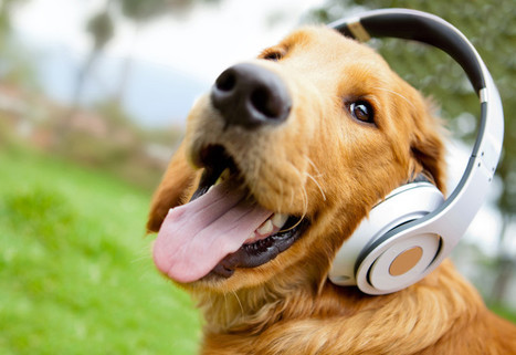 Music Therapy for Dogs | Pets | Scoop.it