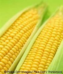 Hungary Destroys All Monsanto GMO Corn | JWK Geography | Scoop.it