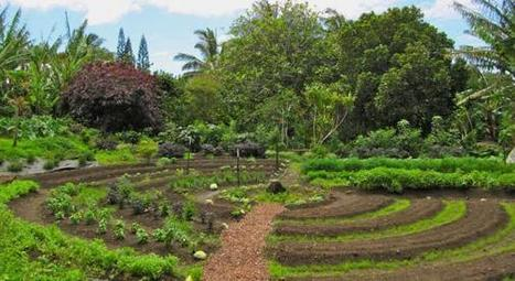 La permaculture est officiellement une activité rentable selon l'INRA | Les coups de coeur de D'Dline 2020 | Scoop.it