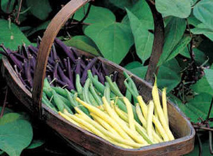 2003: The Year of the Bean   Gardening with kids   Scoop.it