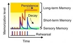 Actu santé : INTELLIGENCE ARTIFICIELLE: Des chercheurs japonais développent une nano-synapse | L'Intelligence Artificielle | Scoop.it