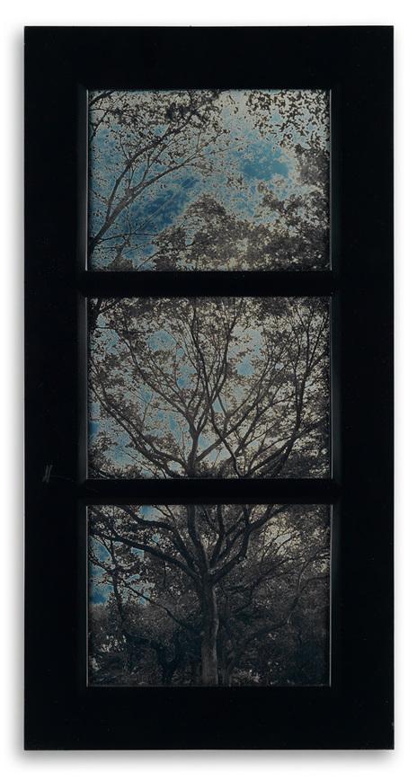 Trees Triptych | Contemporary Daguerreotypes | L'actualité de l'argentique | Scoop.it
