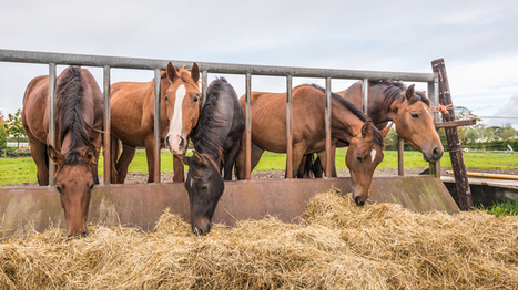 Weight Management for Horses and Ponies | Farming and the Countryside | Scoop.it