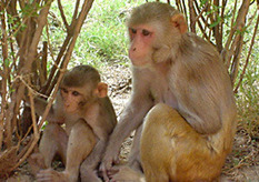 Empathy cells found in monkey brains   Cultura de massa no Século XXI (Mass Culture in the XXI Century)   Scoop.it