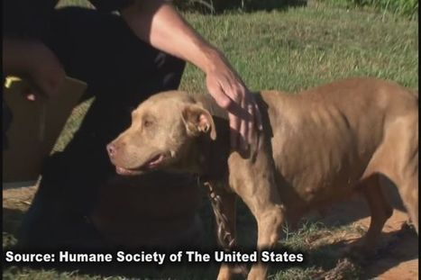 Multiple south Georgians arrested in dog fighting bust - WALB-TV | End dog fighting! | Scoop.it