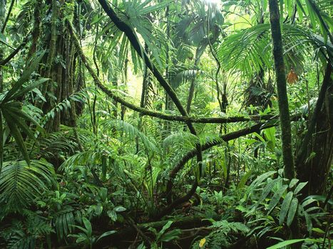 Rainforest | Keeper-independent reading | Scoop.it