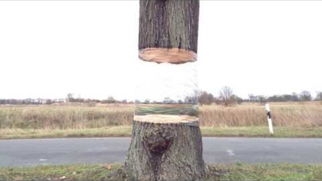 This simple optical illusion makes a tree look like it's floating | Tudo o resto | Scoop.it