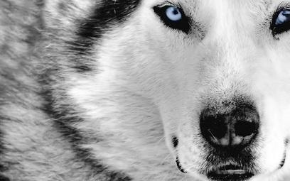 Οι λύκοι μεταμορφώνουν το περιβάλλον   ΝΕΑ ΒΙΟΛΟΓΙΑΣ   Scoop.it