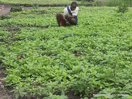 RDC : des paysans de Kikonka s'organisent en associations pour améliorer leur production. | Questions de développement ... | Scoop.it