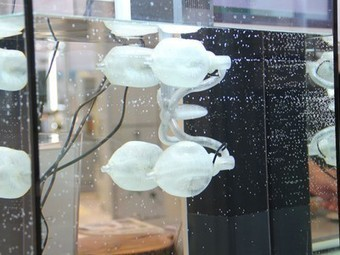 Octopuses Inspire 3D-printed Propulsion Systems for Boats | Biomimicry | Scoop.it