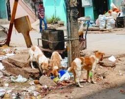 Eye on heads of dog packs   Kalimpong News   AgainstFeralDogs   Scoop.it