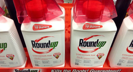 #evil #Monsanto #Pesticides Cause #Cancer, United Nations Claims #health | Messenger for mother Earth | Scoop.it