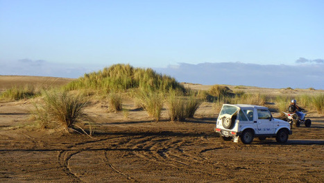 Des esprits sauvages sur les dunes de Cariló en Argentine | Univers du Voyage | Scoop.it